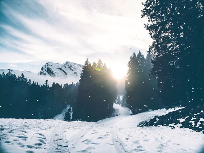 Snow Time Swiss Swiss Alps Winter Snow Cold Temperature Sky Tree Plant Nature Lens Flare Covering Environment No People Tranquility Sunbeam Cloud - Sky Beauty In Nature Sunlight Scenics - Nature Tranquil Scene Outdoors Day