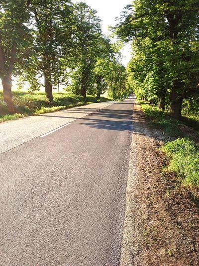 Trees Chessnut Road