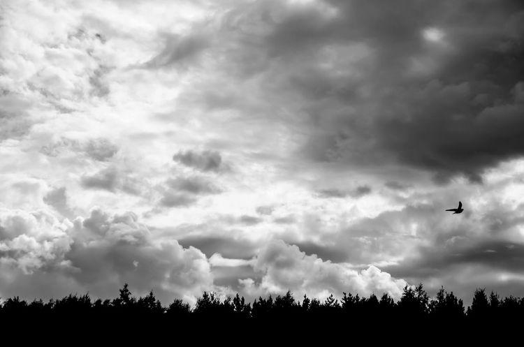 Sky Sky And Clouds Berd Cloud EyeEmNewHere