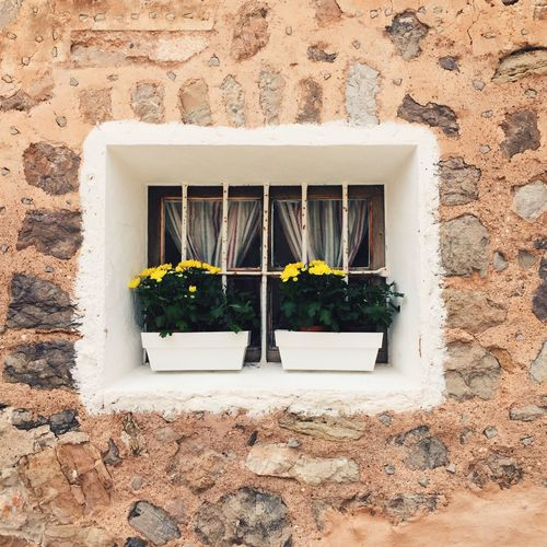 Close-up of window boxes