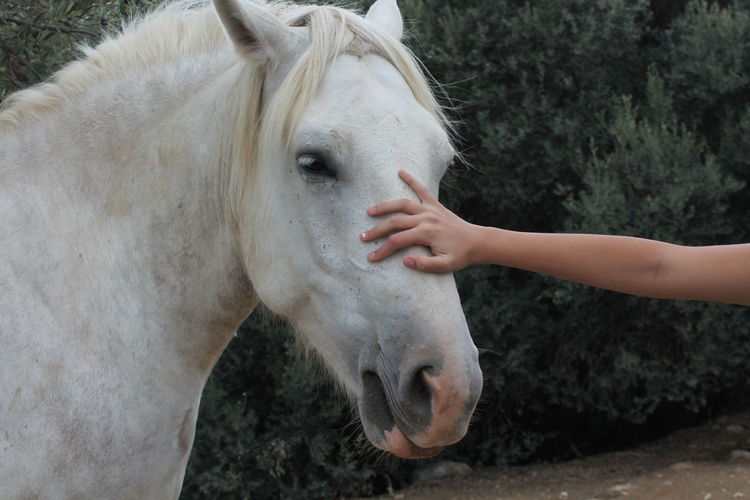 Close-up of hand touching horse in field