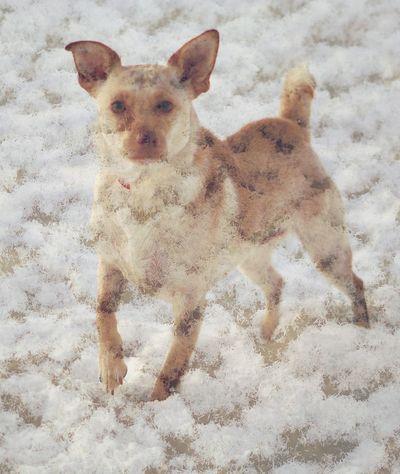 Layers Braun Close-up Dog Domestic Animals Layers Outdoors Snow Winter