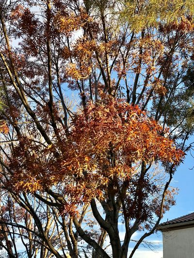 Tree Autumn Branch Change Nature Beauty In Nature Leaf