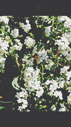 Little bee Cutebutdangerous