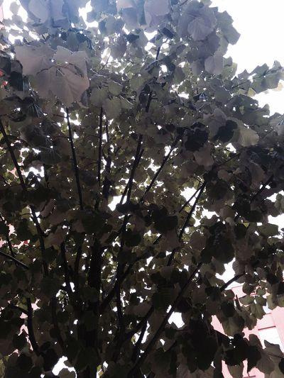 Tree Leaf Green