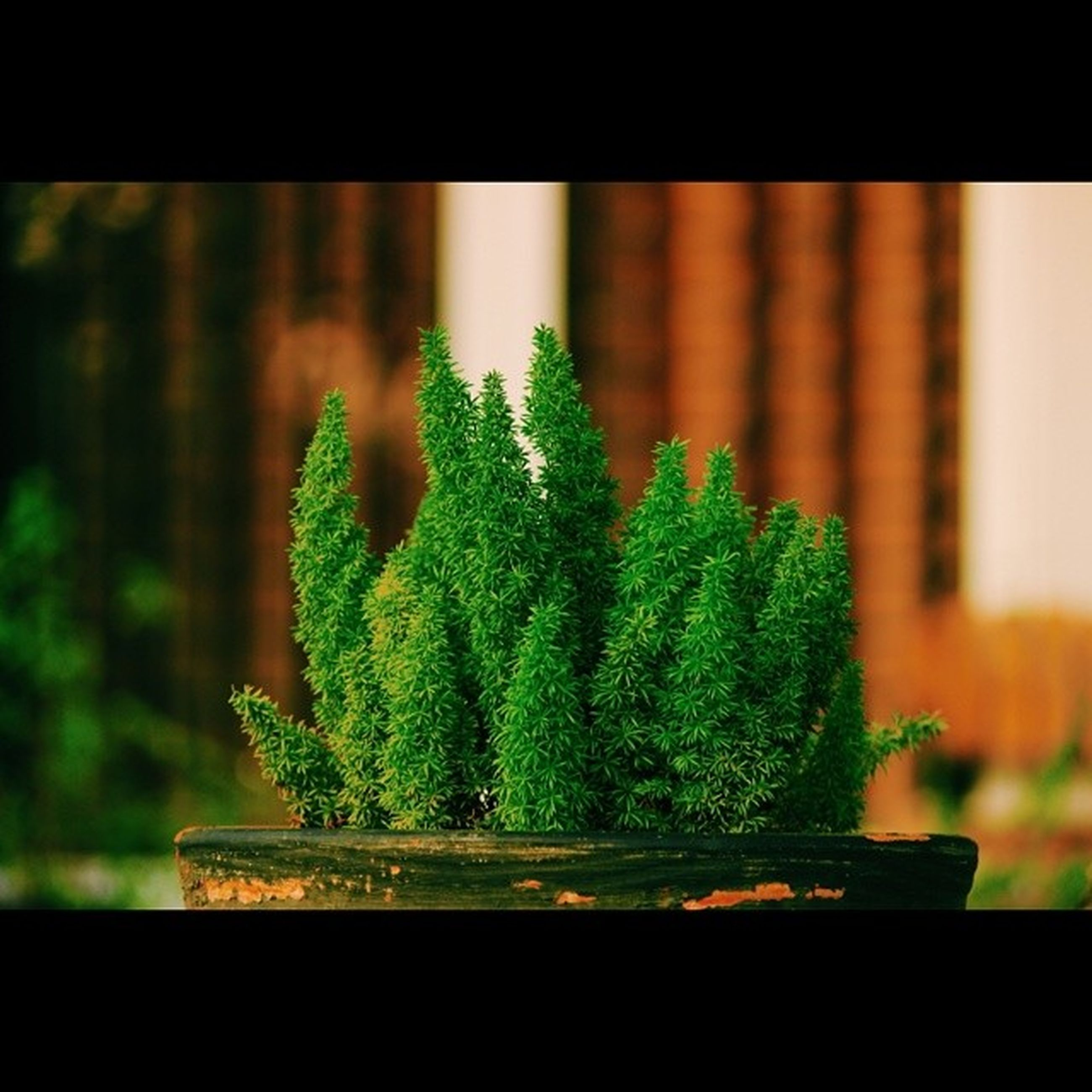 focus on foreground, growth, close-up, plant, potted plant, green color, indoors, selective focus, nature, freshness, leaf, tree, flower, transparent, window, glass - material, day, no people, flower pot, beauty in nature