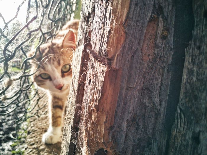 Light Animal Themes Animal Playing Wood Wood - Material Fence Pets Portrait Feline Domestic Cat Leopard Looking At Camera Close-up Cat Kitten Yellow Eyes Animal Eye