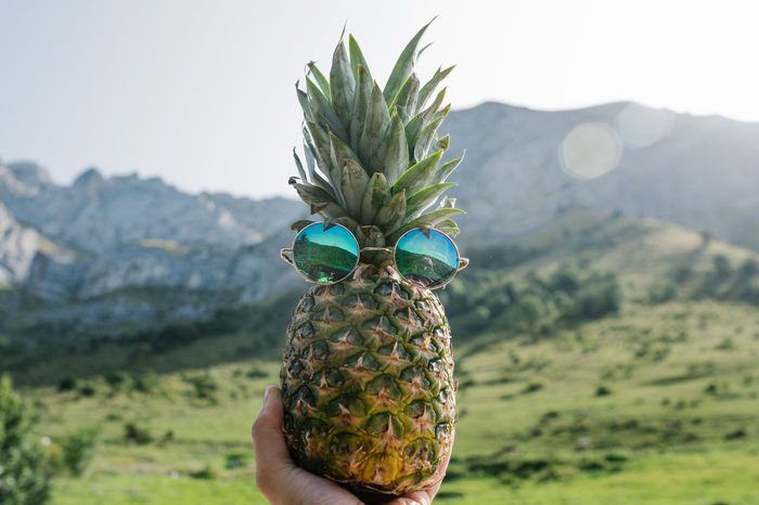 Pineapple Ananas Beauty In Nature Focus On Foreground Freshness Green Color Holding Human Hand Mountain Nature One Person Outdoors People Real People The Week On EyeEm