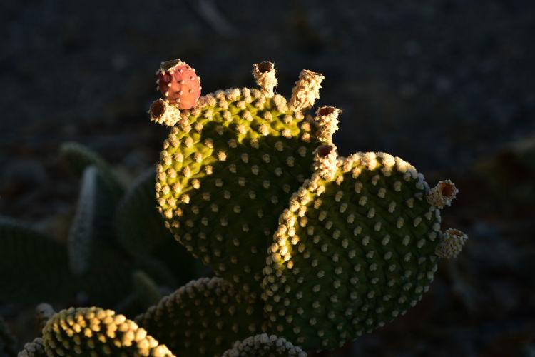 close up detail of spiky green cactus plant Cactus Cactus Garden Desert Life Nature Cactus Fruit Close Up Detail Detail Of Nature Green Cactus Spiky Plant Thorny Cactus