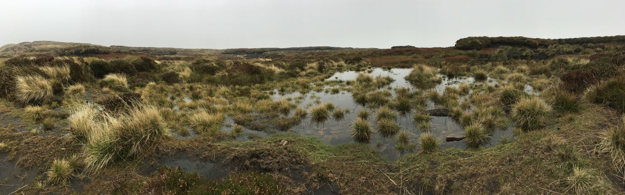 Panoramic with IPhone, However I was lying down so it was compact. Brecon Beacons Fan Y Big Low Angle View Panoramic Remote Location Tuffts Bog Day Grass Landscape Nature No People Outdoors Panoramic Iphone Plant Water