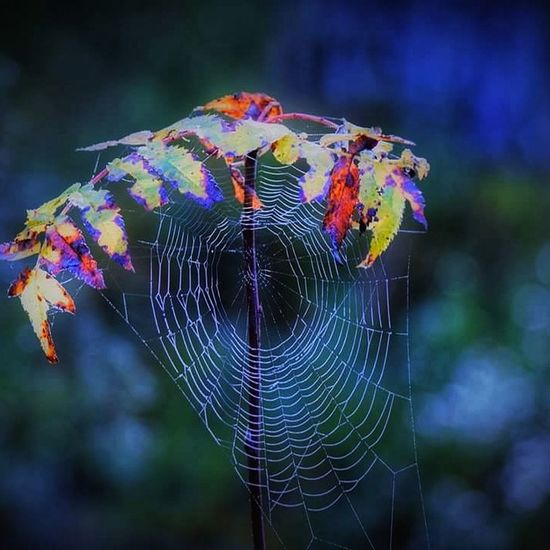 Spider Web Focus On Foreground Outdoors Multi Colored Beauty In Nature Trapped Nature Norway Is Peaceful Autumn🍁🍁🍁 Fragility No People Close-up Web Day Animal Themes Freshness Forest Wood