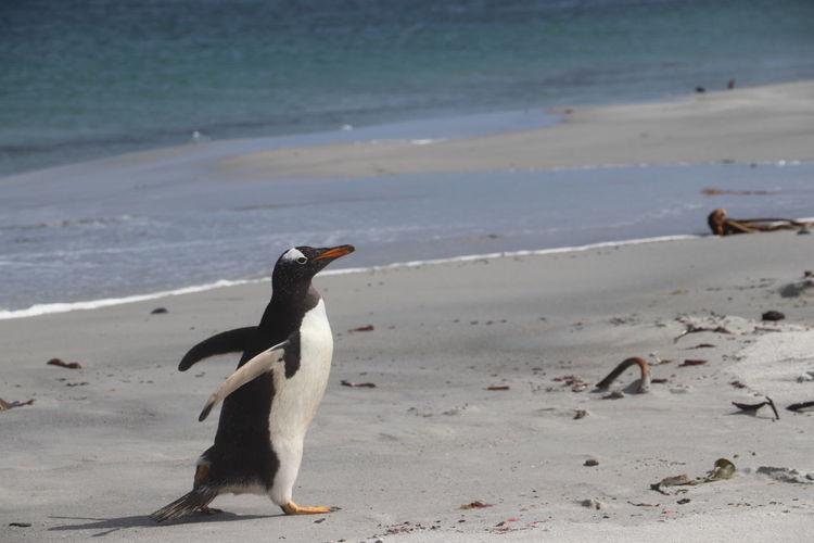 Full length of a bird on beach