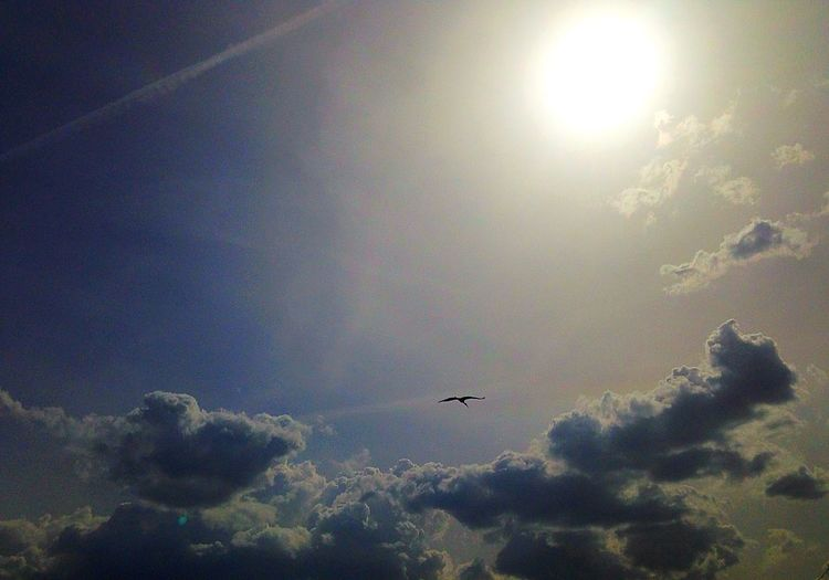 Flight in the skies😱🕊 Sky Sky And Clouds Sun Sunbehindclouds Stork Bird MyPhotography IPhone5 Nature Flight Fly Intheskies 38/100happydays Photography In Motion Photography Moment Art Capture Capture The Moment Relaxing Escape Escaping