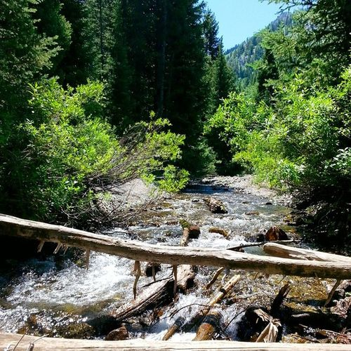 LittleCottonWood Utah Doughnutfalls Trail Luvhike Hiking Forest Landscape Creek Bluesky Trees Water Greenlife