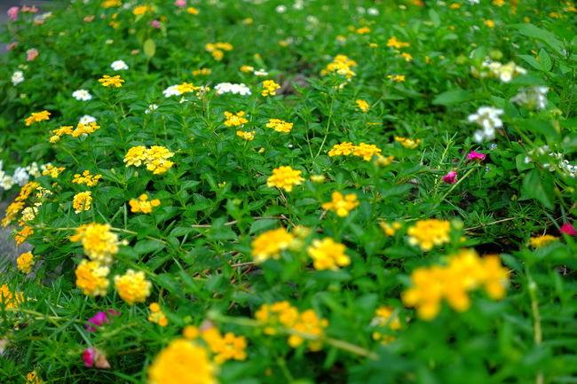 Flower Flower Green Flower Yellow