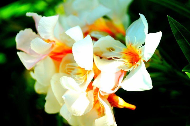 Flower 3 Flower