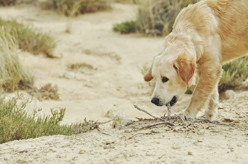 Close-up of dog on sand at beach