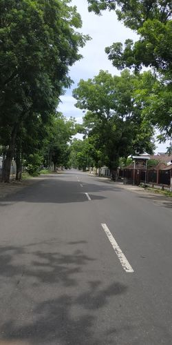 Empty road along trees and plants in city