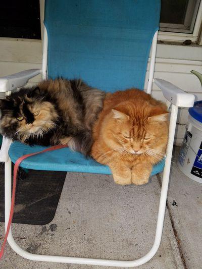 EyeEm Selects Pets Domestic Cat No People
