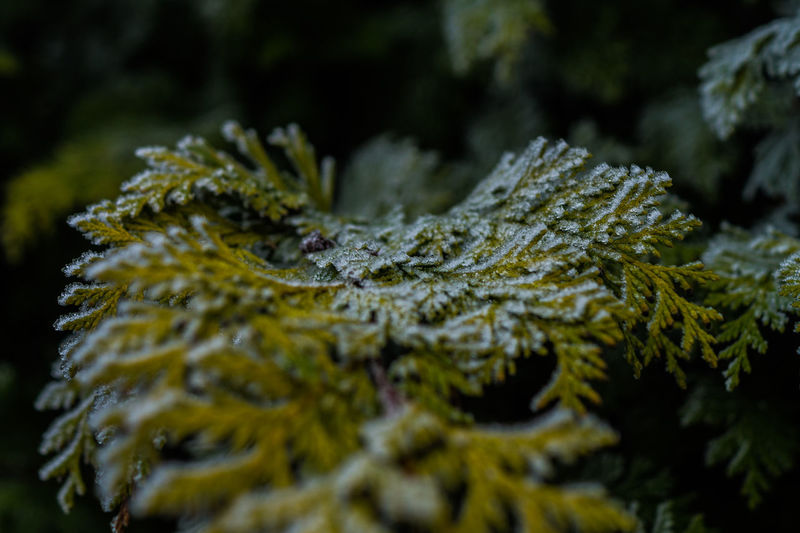 creeping cold Plant Tree Close-up Nature Green Color No People Selective Focus Growth Day Branch Pine Tree Beauty In Nature Coniferous Tree Outdoors Plant Part Leaf Moss Fir Tree Focus On Foreground Lichen EyeEmNewHere EyeEm Best Shots EyeEm Nature Lover