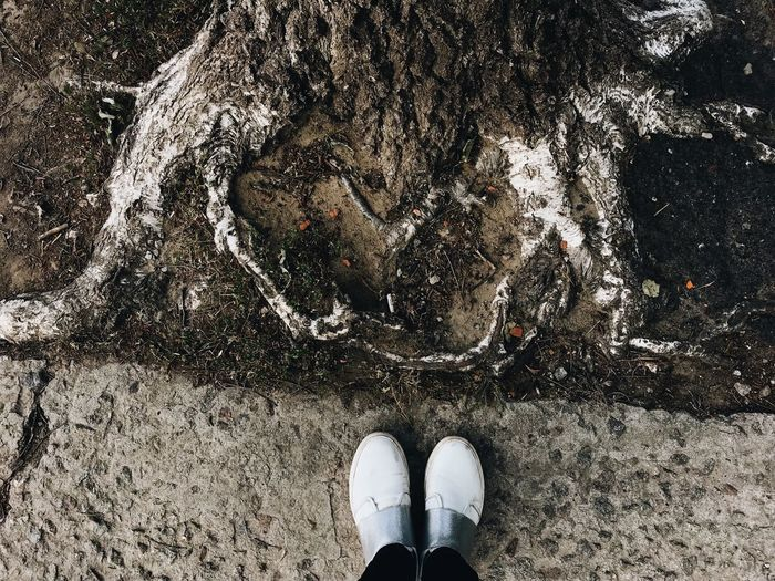 White Color Roots Of Tree Roots Low Section Shoe Real People Human Leg One Person High Angle View Body Part Human Foot Outdoors Lifestyles Standing Personal Perspective Directly Above Human Body Part Unrecognizable Person Nature
