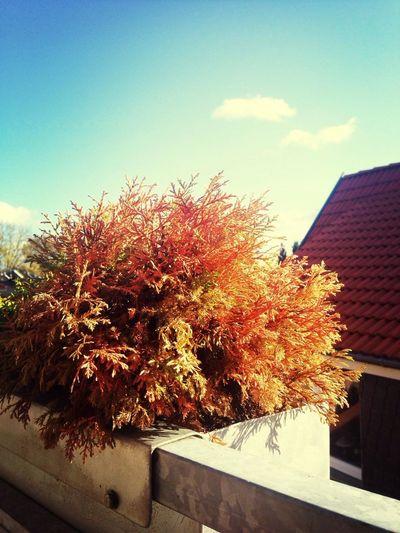 Der warme Herbst !