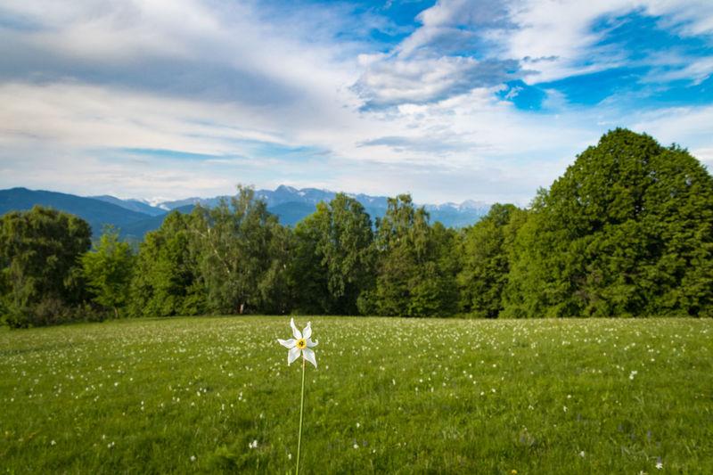 Flower on grassy field against sky