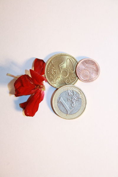 Euro coins Lithuania Cash Close-up Coin Currency Euro Finance Flower Head Indoors  Monete Money No People Savings Still Life Studio Shot Wealth White Background
