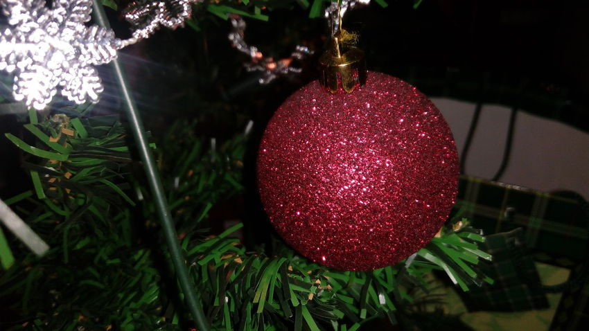 Christmas Christmas Decoration Christmas Ornament Christmas Tree Close-up Day Indoors  Orb Red Tree