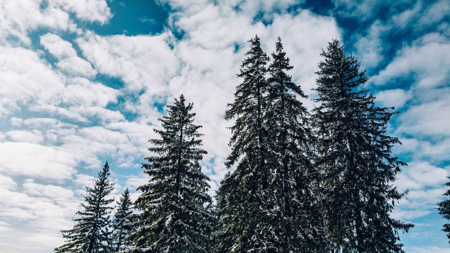 Beauty In Nature Clouds Clouds And Sky Cold Cold Temperature Day Eye4photography  EyeEm Best Shots EyeEm Nature Lover Forest Hello World Nature Nature Nature Photography Nature_collection Naturelovers No People Outdoors Poland Scenics Sky Tree Weather Winter Winter