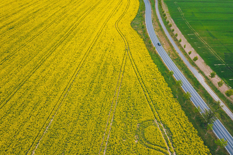 High angle view of yellow field