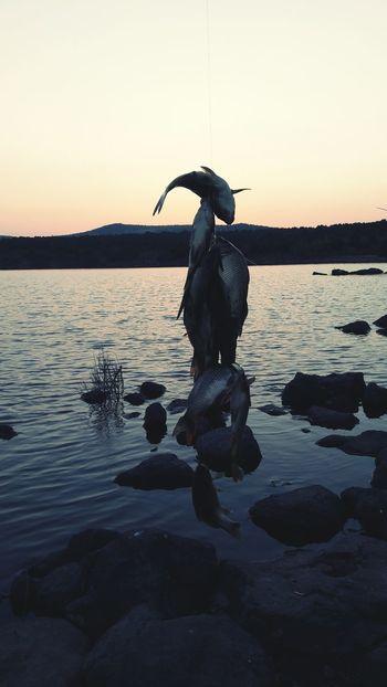 Lake View Lake View Eventide This Is A Fish Fishing Fisherman Fishermen