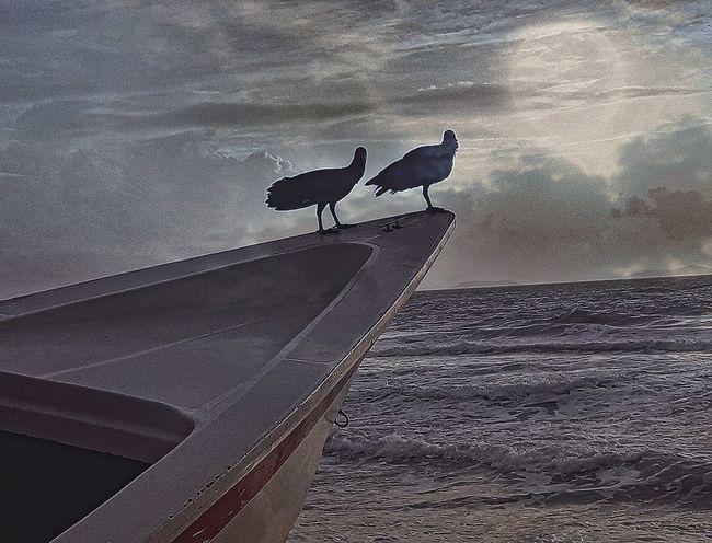 Silhouette Bird Beachphotography Beachview Caribian Caribbean Venezuelafotos_ Fisher Boats Cormorants Seascape