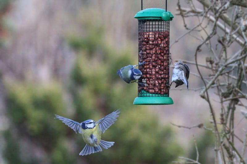 Help...I'm falling Bird Bird Feeder Animals In The Wild Focus On Foreground Animal Themes Animal Vertebrate Animal Wildlife Group Of Animals Day No People Flying Nature Two Animals Close-up Spread Wings Mid-air Outdoors Hanging Plant