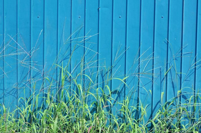 Minimalobsession Grass Wall Lines Dots Curves Green Blue 緑 青