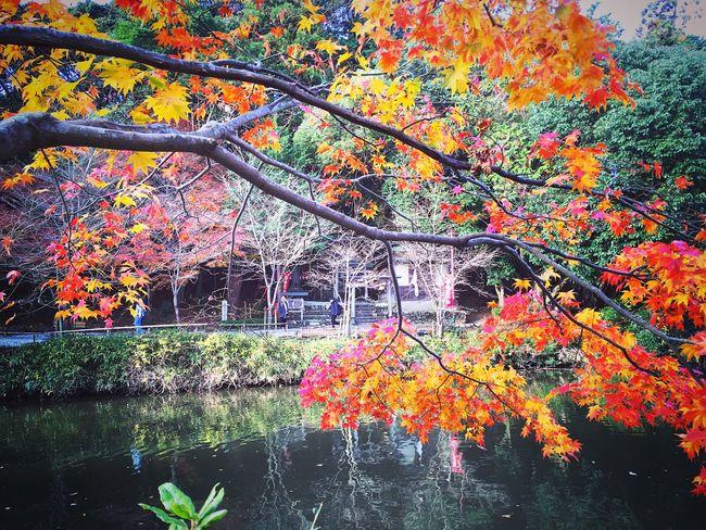 御髪神社 嵯峨野 京都 Kyoto 紅葉 Autumn Leaves Kyoto Autumn Hello World Enjoying Life Travel Destinations Autumn Kyoto, Japan Autumn Colors Beauty In Nature Relaxing