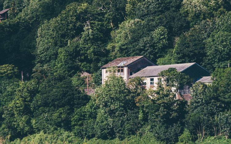 Tree House Home Old House Forest Check This Out Green Trees Cornwall Isolated