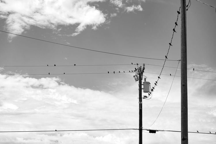 Low angle view of birds on cable against sky
