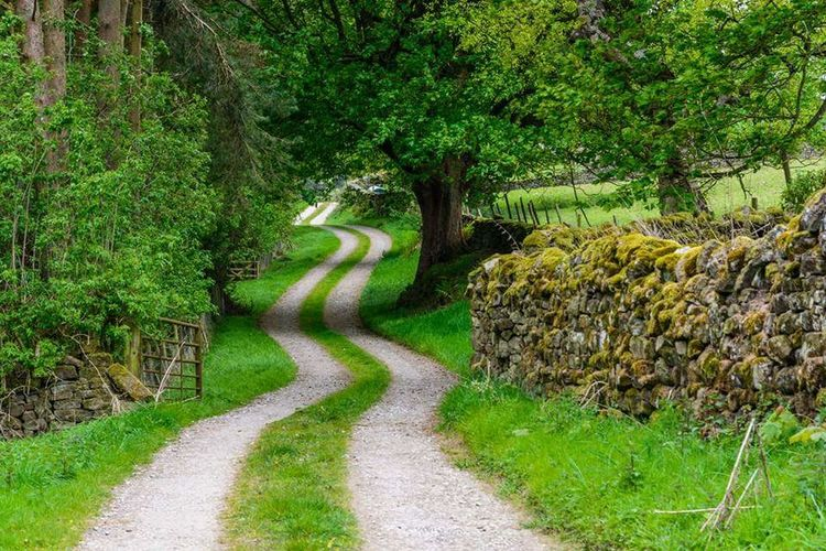 Growth Nature Green Color Tree Field Tranquility Outdoors Grass No People Tranquil Scene The Way Forward Plant Beauty In Nature Day Scenics Landscape Sky Path In Nature Tracks Longandwindyroad Yorkshire