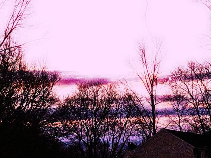Millennial Pink Nature Bare Tree Sunset Tree Growth Silhouette Scenics Branch Beauty In Nature Sky No People Outdoors Popular Photos Plant Clear Sky Day Close-up Eyeemphoto