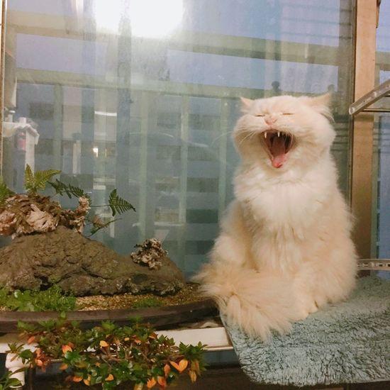Yawning Kid Heema