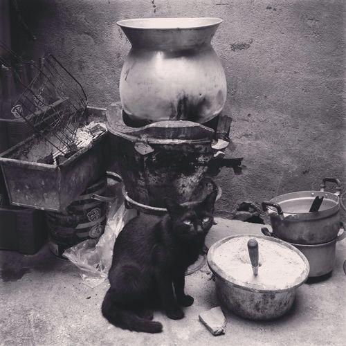 Iphonephotography Thailand_allshot Black & White Black Cat