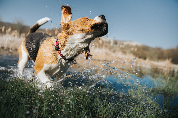 Close-up of dog splashing water against sky