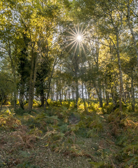 Woodland in