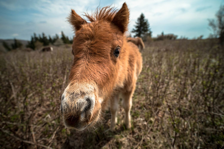 Wide angle close up of horse standing in a field