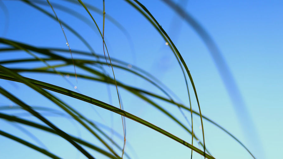 Close-up of grass against clear blue sky