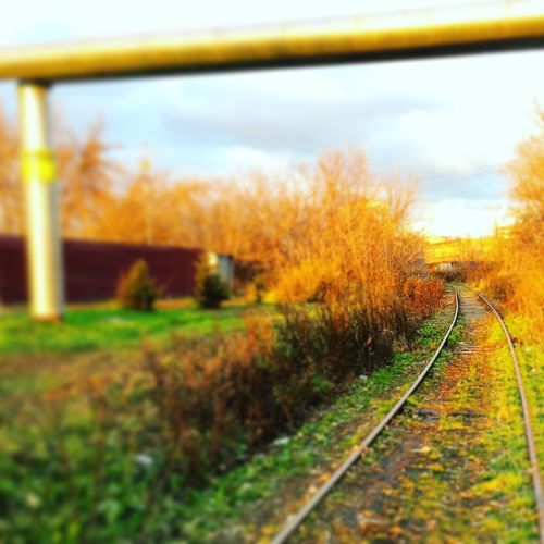 Krasnoyarsk The Way Forward Day Transportation Railroad Track Nature Yellow Beauty In Nature No People