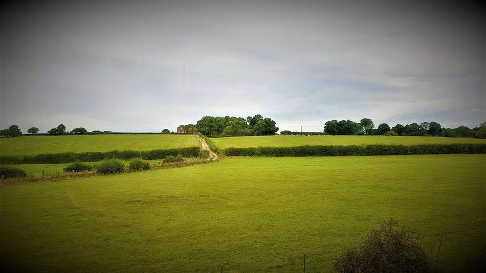 Countryside between Rolvenden and Tenterden Town 2017 2017 2017 Year K&ESR K&ESR Railway Nice Day The Rother Valley Railway The Rother Valley Railway Travel Photography Beauty In Nature Day Field Grass Green Color Growth Landscape Nature No People Outdoors Rural Scene Scenics Sky Tranquil Scene Tranquility Travelphotography Tree