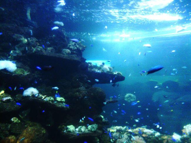 Sea View Deep Blue Sea Seafish Seaaquarium Nature Photography Sealife Showing Imperfection
