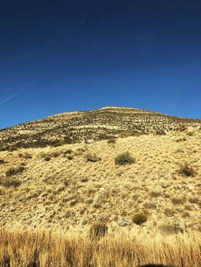 Dry grassy hill against a clear blue sky in New Mexico. Blue Sky Clear Sky Brown Color Dry Grass Agriculture Hill No People Copy Space Daylight Blue Outdoors Non-urban Scene Mountain Sunlight Landscape Desert Landscape Wheat Land Grass Scenics - Nature Bushes New Mexico Countryside Absence Remote Location
